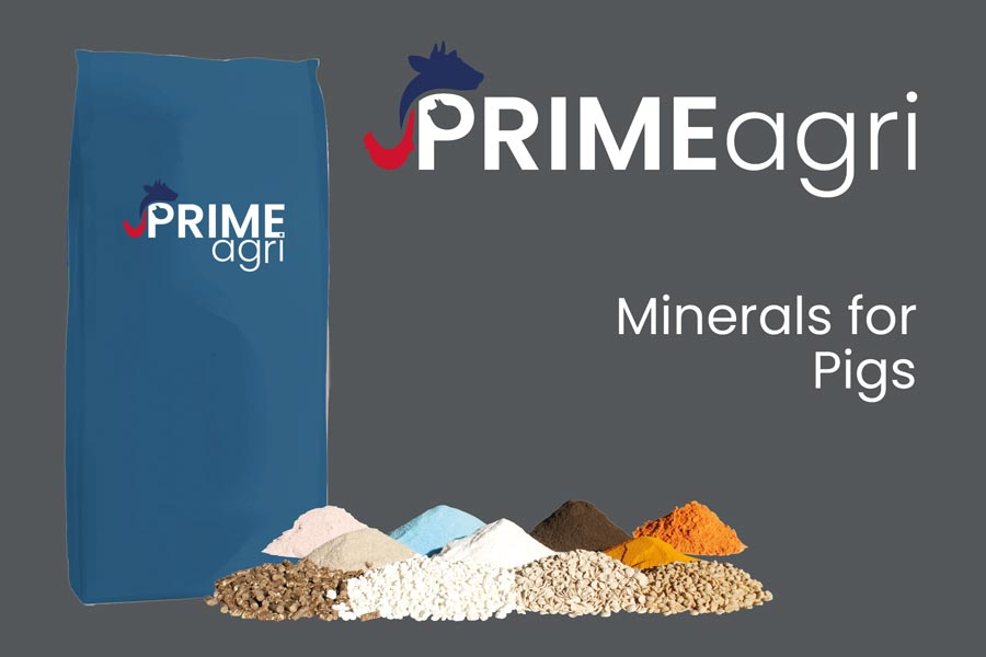 Minerals For Pigs