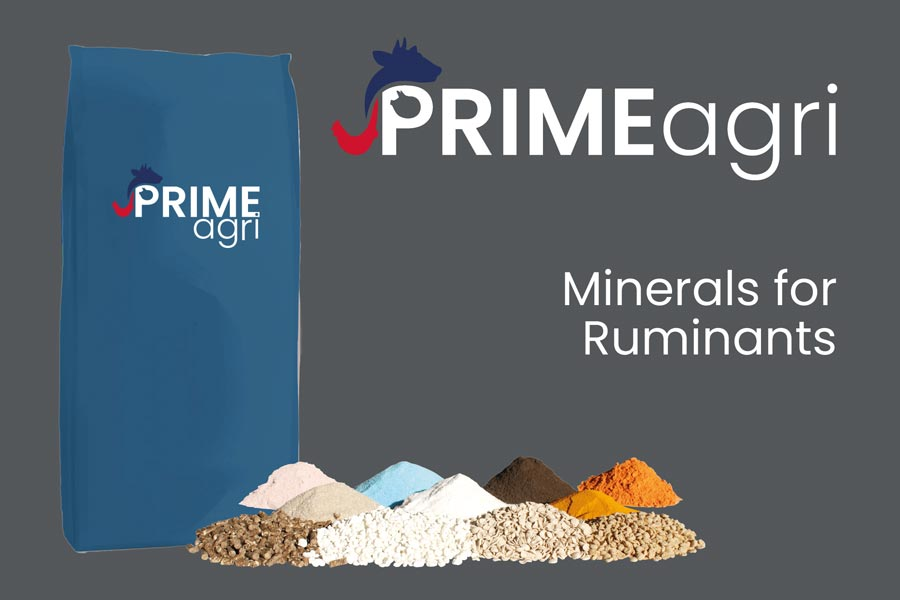 Minerals For Ruminants